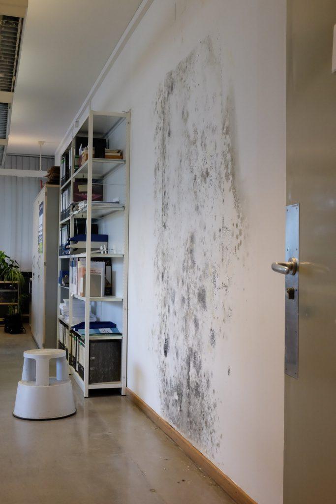 Schimmel und Wasserflecken an Decke und Wand im Großraumbüro von Team 4